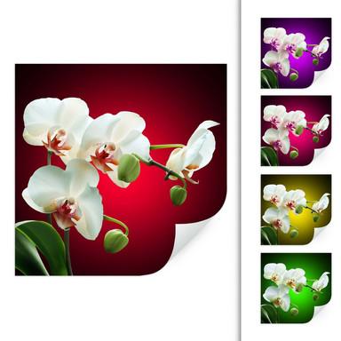 Wallprint Blütenpracht einer Orchidee - quadratisch