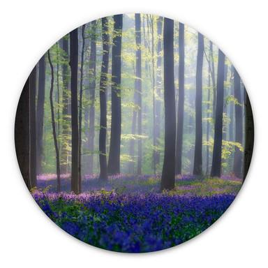 Alu-Dibond Popan - Glockenblumen - Rund