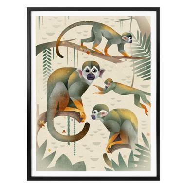 Poster Braun - Squirrel Monkeys