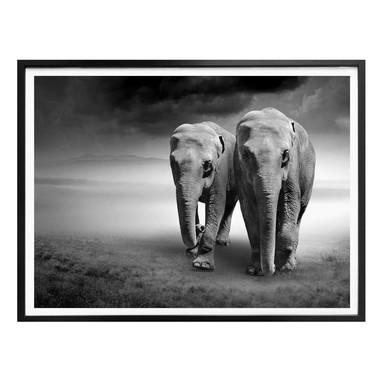 Poster Die Elefanten