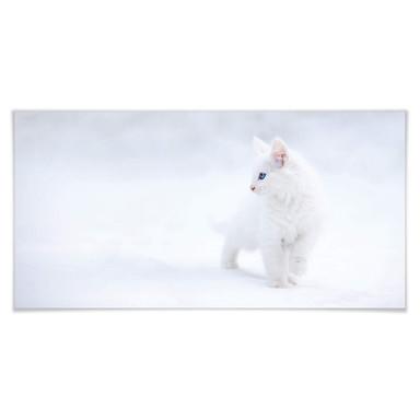 Poster Prexus - Weisser als Schnee