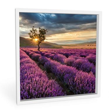 Hartschaumbild Lavendelblüte in der Provence - quadratisch