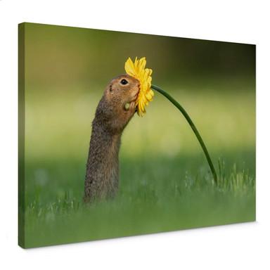 Leinwandbild van Duijn - Erdhörnchen schnuppert an Blume