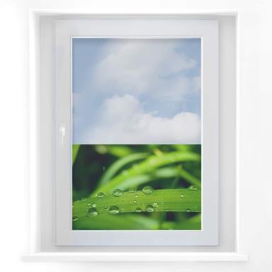 Fensterbild Natur 5