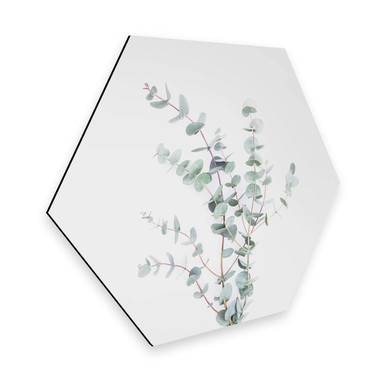 Hexagon - Alu-Dibond Sisi & Seb - Eukalyptuszweig