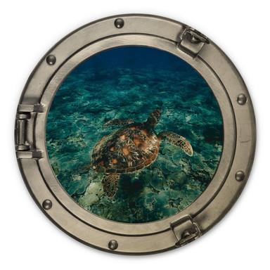 Holzbild 3D Optik - Schildkröte von oben - Rund