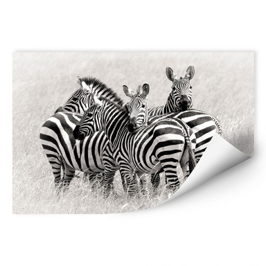 Wallprint Trubitsyn - Zebras in der Savanne