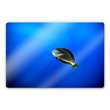 Glasbild Catta - Deep Ocean