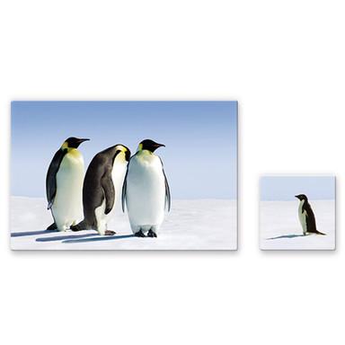 Glasbild Penguin (2-teilig)