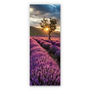 Hartschaumbild Lavendelblüte in der Provence - Panorama 02