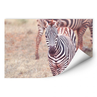 Wallprint Zebra Fohlen
