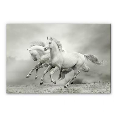 Acrylglasbild Pferde im Galopp