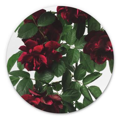 Alu-Dibond Kadam - Flora Rose - Rund