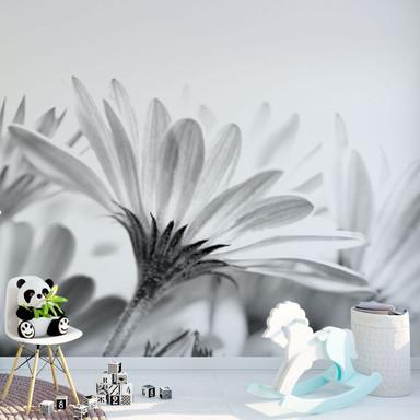Fototapete Gänseblümchen im Detail - 240x260cm - Bild 1