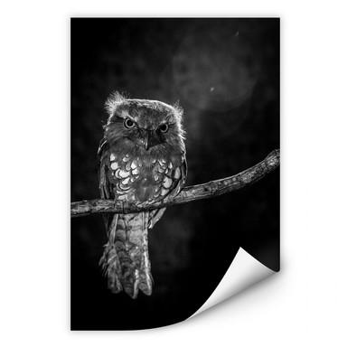 Wallprint Wilianto - Staring Owl