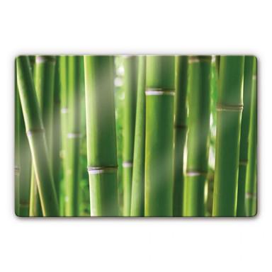 Glasbild Bambuswald