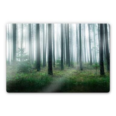 Glasbild Lindsten - Im Wald