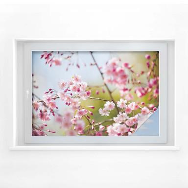 Sichtschutzfolie Cherry Blossoms