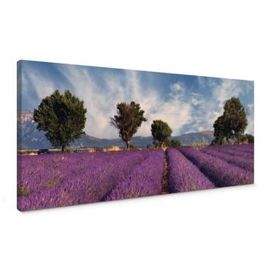 Leinwandbild Lavendelfeld - Panorama