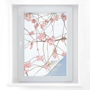 Sichtschutzfolie Kadam - Japanische Kirschblüte