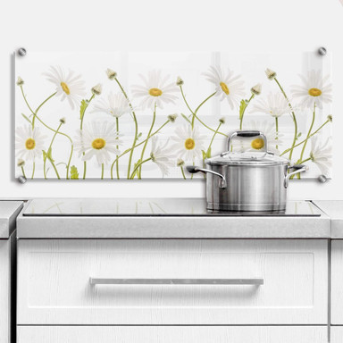 Spritzschutz Disher - Ox eye Daisies - Panorama