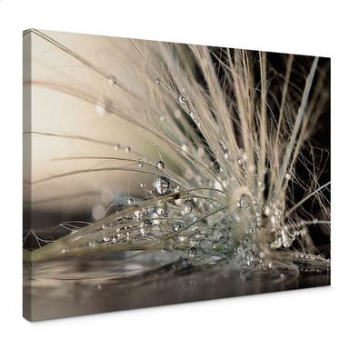 Leinwandbild Zahirimehr - Story of a Waterdrop - Wassertropfen