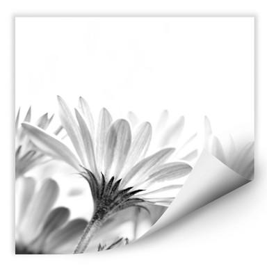 Wallprint Gänseblümchen im Detail - quadratisch