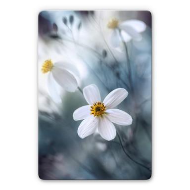 Glasbild Disher - Die weisse Blüte