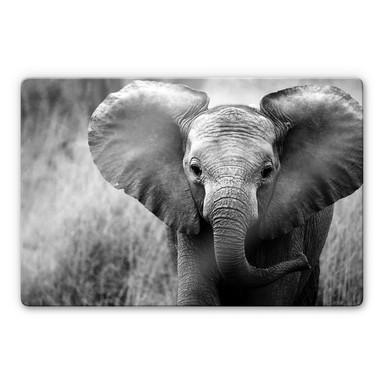 Glasbild Jumbo der kleine Elefant