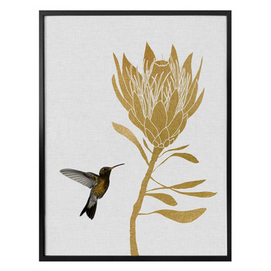 Poster Orara Studio - Hummingbird and Flower - goldene Blume