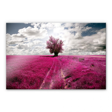 Acrylglasbild The Lonely Tree