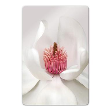 Glasbild Haslam - Magnolie