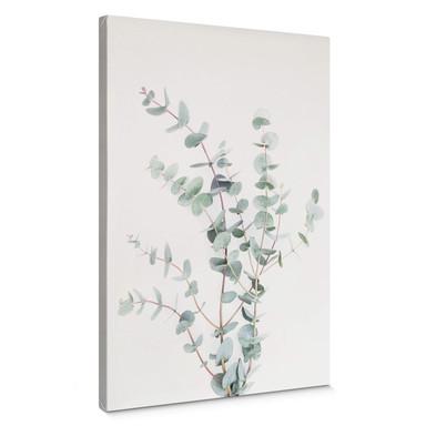 Leinwandbild Sisi & Seb - Eukalyptuszweig