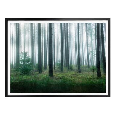 Poster Lindsten - Im Wald