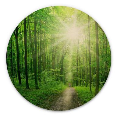 Holzbild - Sunny forest - Rund