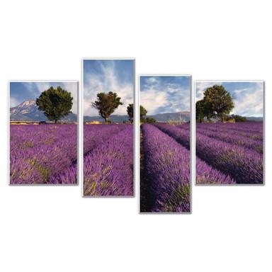 Hartschaumbild Lavendelfeld (4-teilig)