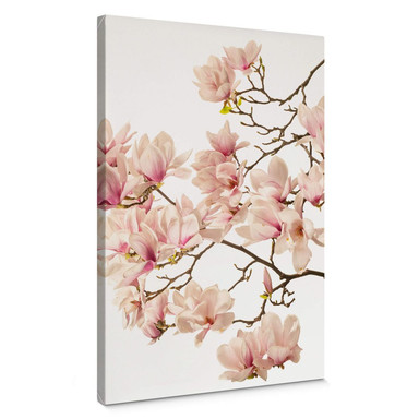 Leinwandbild Kadam - Flora Magnolia im Frühling