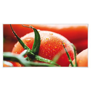 Poster Fresh Tomato - Panorama