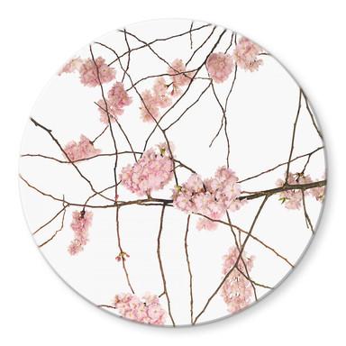 Glasbild Kadam - Flora Japanische Kirschblüte - Rund