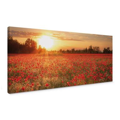 Leinwandbild Mohnfeld im Sonnenuntergang - Panorama