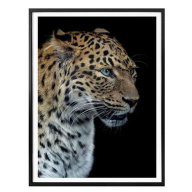 Poster Dambreville - Neugieriger Jaguar