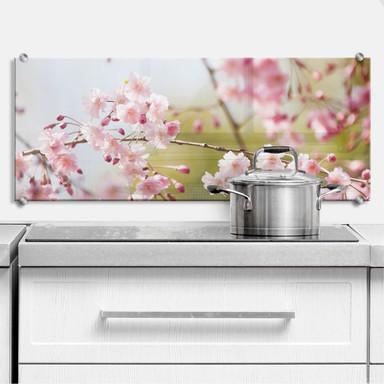 Spritzschutz Cherry Blossoms - Panorama