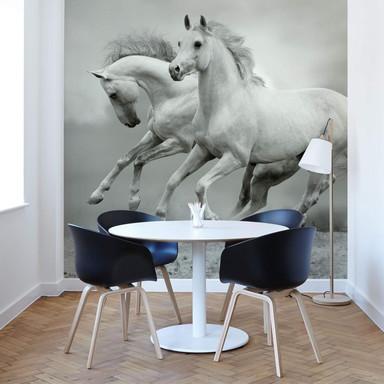 Fototapete Pferde im Galopp - 336x260cm - Bild 1
