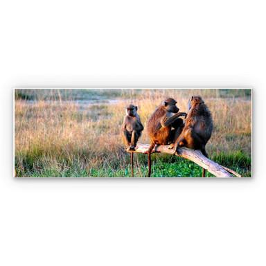 Hartschaumbild Affenbande - Panorama