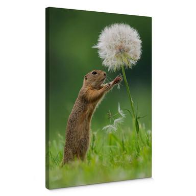 Leinwandbild van Duijn - Erdhörnchen mit Pusteblume