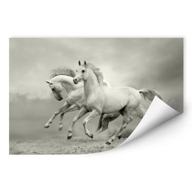 Wallprint Pferde im Galopp