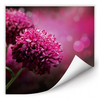 Wallprint Pink Dahlia