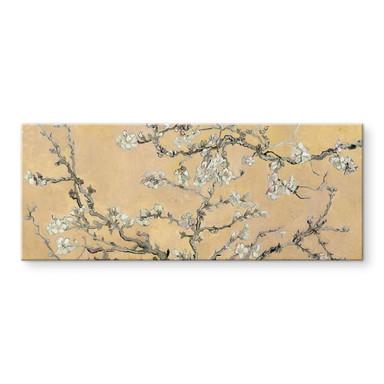 Acrylglasbild van Gogh - Mandelblüte Creme - Panorama