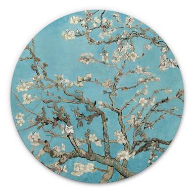 Alu-Dibond van Gogh - Mandelblüte - Rund