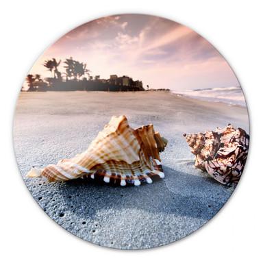 Glasbild Muschelparadies - rund